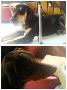 The Dobermonster Furies. Top photo: Alecto Bottom: Tisiphone